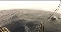 Sailing VOR60 across the North Atlantic with dolphins